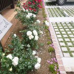 CAFE RESTAURANT VICTORIA - 入口脇のバラ