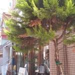 シャワー パーティ カフェ - 大きな木♡