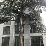 Hua Sheng Hotel - 恐竜時代の木
