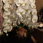 旬美にしかわ - 私が持って行ったお花で大将、女将さんに喜んで頂けました。