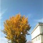 6911786 - 12月だと言うのに、秋の風情です