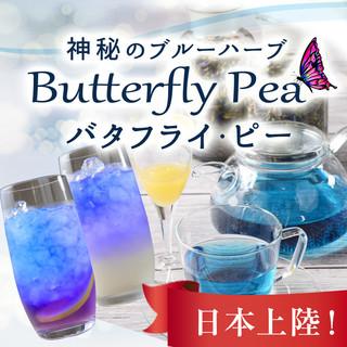 話題の「青いお茶」神秘のブルーハーブ、バタフライ・ピー!