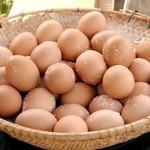 こだわり卵専門店 たまごや - 料理写真: