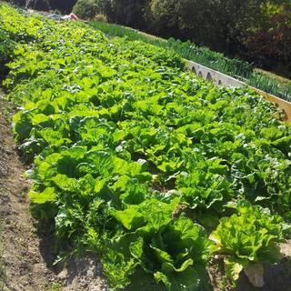 自家栽培で育てたお野菜を