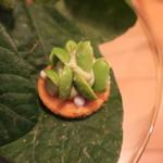 ナイン ストーリーズ - アミューズ1:枝豆とサワークリームのミニ・サブレ2