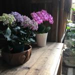 69589715 - 紫陽花を眺めつつアイス