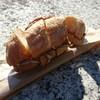 ビワコ・ドーターズ - 料理写真:ふなずしサンドウィッチ