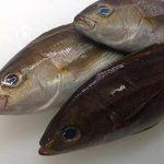 海鮮丼屋  海舟 - 2017年6月26日、こんにちは《小田原海舟です》 本日入荷した夏到来を感じさせる魚〈イサキ〉について 紹介します!!!✨ 夏になると脂がのってくるため、古くから夏の塩焼き魚の定番でした。が、、近年ではむしろ刺身に人気が出て来ています! この機会に是非ご賞味下さい✨✨ 本日生しらすも入荷しております!!