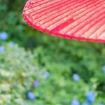 明月院 月笑軒 - 茶屋の傘越しの紫陽花