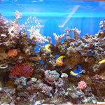 ロイヤルクリスタルカフェ - 2011年2月手入れの行き届いた水槽はとってもキレイ