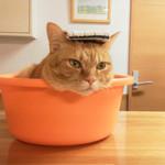 トライシクルカフェ - 猫超絶カワイイ