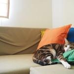 トライシクルカフェ - 猫最高にカワイイ