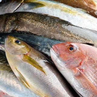 直接漁師さんから届く新鮮な魚介類♪