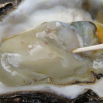 69969856 - 岩牡蠣(隠岐産)