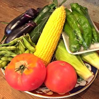 【仕入情報】夏野菜たくさん仕入れました!