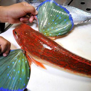 鮮魚・焼き鳥ダイニングCIRCUS
