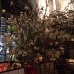 鉄板焼ばらもんや - 桜祭り