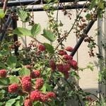 農家れすとらん和花の里 - 料理写真: