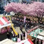 住留 - 2月の三浦海岸駅前は【河津桜まつり】で賑やか!