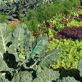 契約農家『わたなべ農園』の【新鮮野菜】