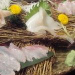 積丹浜料理 第八 太洋丸 - 新鮮日替わりお刺身盛り!