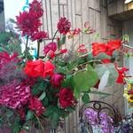 美味しいラビオリとワイン イタリアンバルAlfo - お花が綺麗~(^-^)