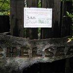 岩湧の森 お茶処 CHELSEA - 岩湧の森 お茶処 CHELSEA