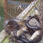 つり堀 武蔵野園 - 二時間でいっぱい釣れた