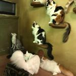 Cat Cafe てまりのおうち - 猫だらけ♪
