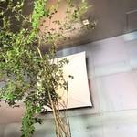 茶の葉 - 大きな木がある店内