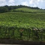 70567869 - 勾配の急な葡萄畑がすぐ裏手にある。