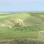 70753468 - 【2017年06月】宗谷丘陵、周氷河地形と放牧されている黒牛です。
