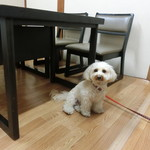 近江屋 - 個室で愛犬と一緒です。