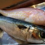 アナログ舎 - 旬の魚 いとより鯛&鯖
