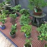 ラ テラス - 盆栽屋さんもあるよ、日比谷花壇も入ってるよ…