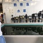 ラ テラス - 金魚屋さんに…、金魚の釣り堀…(T_T)