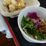 71151406 - 摘み草サラダ