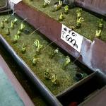 伊豆手作り菓子工房グリーンヒル土肥 - 山葵