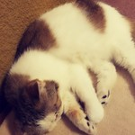 猫の時間 - ぁあ…かわゆす(* >ω<)