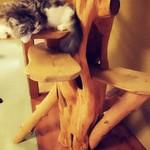 猫の時間 - チェシャ猫ちゃん?