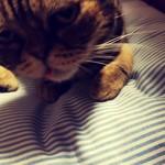 猫の時間 - ブサカワw