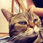 猫の時間 - ひざに来てくれた子がブサイコやった件w