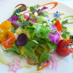 ミシェル・ブラス トーヤ ジャポン - 若野菜で仕上げたガルグイユー 発芽豆&ハーブ しもつけ草オイルのレドプール