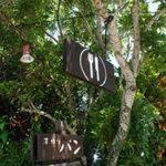 椰子並木 -