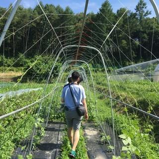 安心産直国産食材!夏場は長野の飯田さんの野菜
