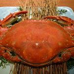 蟹御殿 - 「竹崎ガニ」冬は卵を持った雌蟹、春から秋は雄蟹が出ます♪