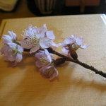 7177266 - 桜を添えて