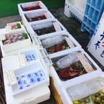 貝増商店 - ハマグリ達