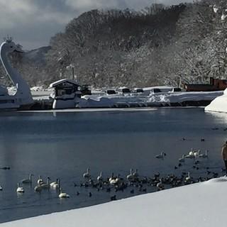 白鳥が飛び立つ眺めは最高!猪苗代湖を眺める一等地