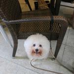 恵比寿 箸庵 - アンはママの椅子の下